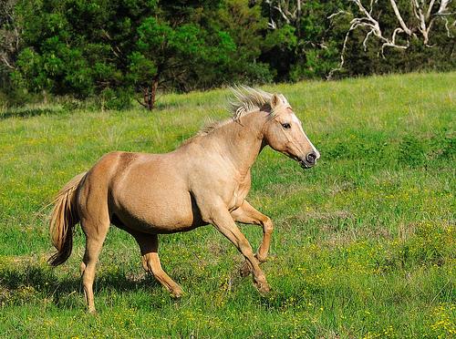 フリー画像| 動物写真| 哺乳類| 馬/ウマ|        フリー素材|