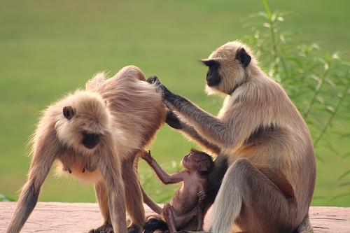 フリー画像| 動物写真| 哺乳類| 猿/サル| 親子/家族| 子猿|      フリー素材|