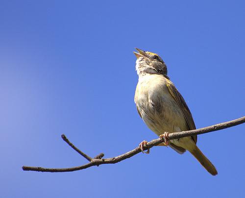 フリー画像| 動物写真| 鳥類| 野鳥| イナゴヒメドリ| 見上げる|      フリー素材|