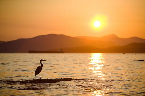 フリー画像| 自然風景| 夕日/夕焼け/夕暮れ| 海の風景| 鳥類| シルエット| 橙色/オレンジ|     フリー素材|