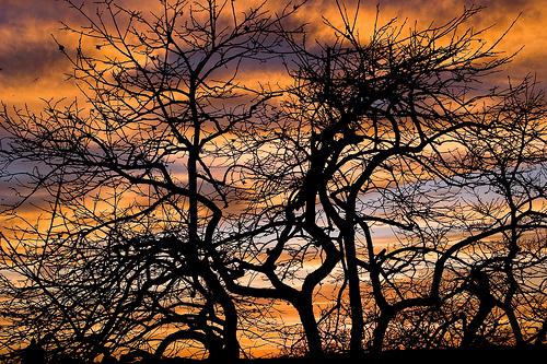 フリー画像| 自然風景| 樹木の風景| シルエット| 夕日/夕焼け/夕暮れ| イタリア風景|      フリー素材|