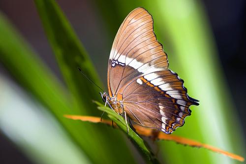 フリー画像  節足動物  昆虫  蝶/チョウ         フリー素材 