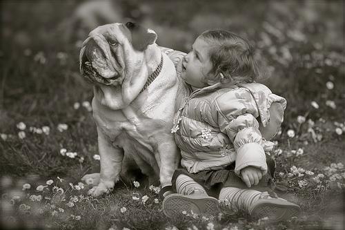 フリー画像| 人物写真| 子供ポートレイト| 外国の子供| 赤ちゃん| 少女/女の子| 哺乳類| イヌ科| 犬/イヌ| ブルドッグ| モノクロ写真| フリー素材|