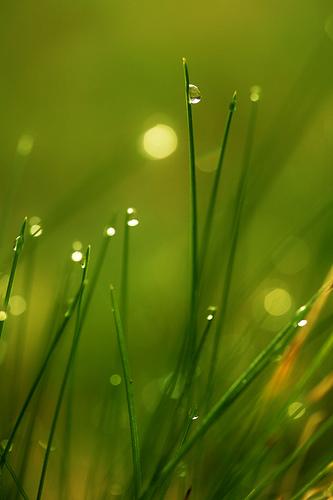 フリー画像| 植物| 雫/水滴| 緑色/グリーン|        フリー素材|