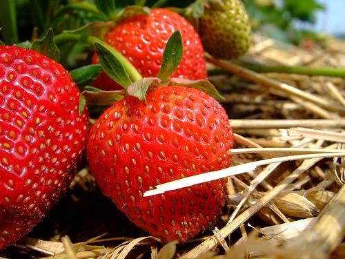 フリー画像| 食べ物| 果物/フルーツ| 苺/イチゴ|        フリー素材|