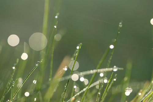 フリー画像| 植物| 雫/水滴|         フリー素材|