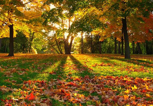 フリー画像| 自然風景| 森林/山林| 紅葉| 樹木の風景|       フリー素材|