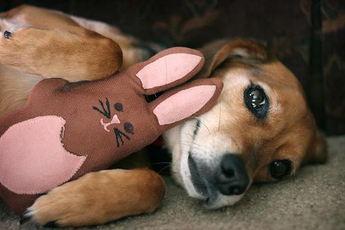 フリー画像| 動物写真| 哺乳類| イヌ科| 犬/イヌ| ビーグル犬| ぬいぐるみ|     フリー素材|
