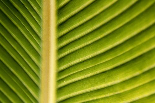 フリー画像  植物  葉っぱ  緑色/グリーン         フリー素材 