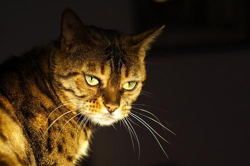 フリー画像| 動物写真| 哺乳類| ネコ科| 猫/ネコ| チャトラ|      フリー素材|