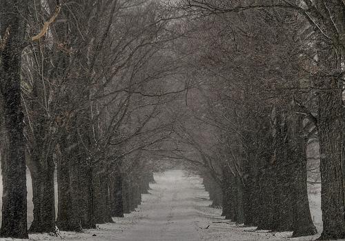 フリー画像| 人工風景| 道の風景| 並木道| アメリカ風景| ニュージャージー州|      フリー素材|