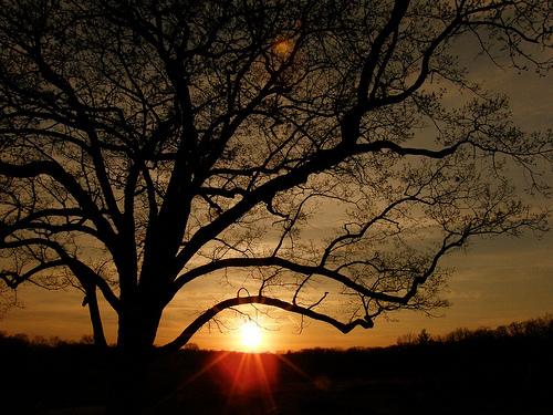 フリー画像| 自然風景| 樹木の風景| 夕日/夕焼け/夕暮れ| シルエット|       フリー素材|