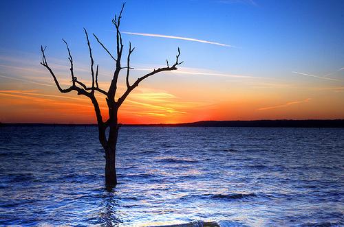 フリー画像| 自然風景| 樹木の風景| 湖の風景| 夕日/夕焼け/夕暮れ|       フリー素材|