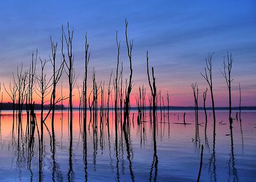 フリー画像| 自然風景| 朝日/朝焼け| 樹木の風景| 湖の風景| アメリカ風景|      フリー素材|