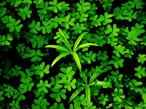 フリー画像| 植物| 葉っぱ| 緑色/グリーン|        フリー素材|