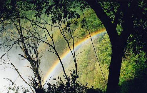 フリー画像| 自然風景| 虹の風景| 森林/山林| 緑色/グリーン|       フリー素材|