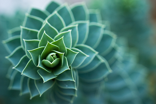 フリー画像  植物  サボテン  緑色/グリーン         フリー素材 