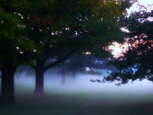 フリー画像| 自然風景| 樹木の風景| 霧/靄| アメリカ風景| ウィスコンシン州|      フリー素材|