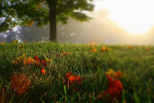 フリー画像| 自然風景| 草原の風景| 雫/水滴| 朝日/朝焼け|       フリー素材|