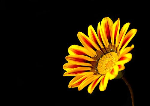 フリー画像| 花/フラワー| イエロー/花|         フリー素材|