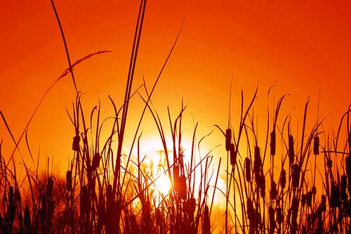 フリー画像| 自然風景| 夕日/夕焼け/夕暮れ| 草原の風景| 橙色/オレンジ|       フリー素材|