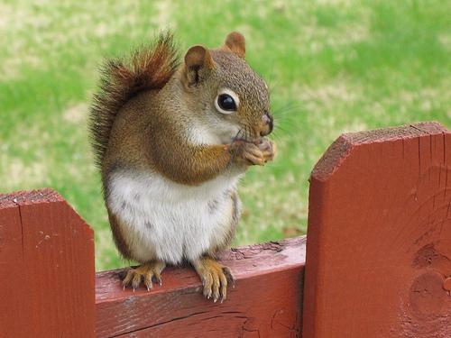 フリー画像| 動物写真| 哺乳類| 小動物| リス科| リス|      フリー素材|