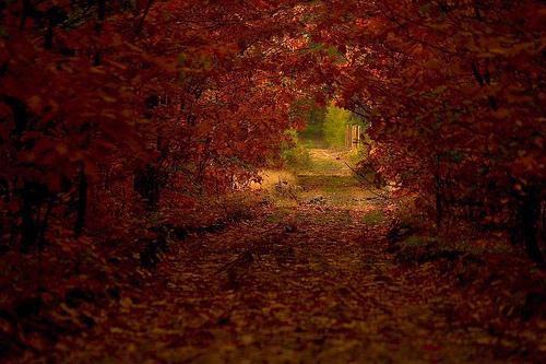 フリー画像| 自然風景| 道の風景| 紅葉| 森林/山林|       フリー素材|