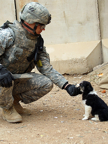 フリー画像| 戦争写真| 兵士/ソルジャー| 人物写真| イヌ科| 犬/イヌ| 子犬|     フリー素材|