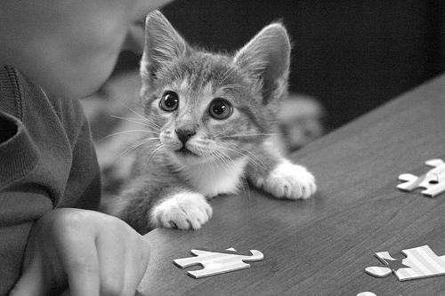 フリー画像| 動物写真| 哺乳類| ネコ科| 猫/ネコ| 子猫| モノクロ写真|     フリー素材|