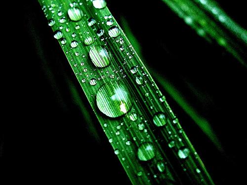 フリー画像| 植物| 葉っぱ| 雫/水滴| 緑色/グリーン|       フリー素材|