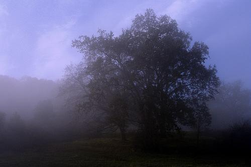 フリー画像| 自然風景| 樹木の風景| 霧/靄| アメリカ風景|       フリー素材|