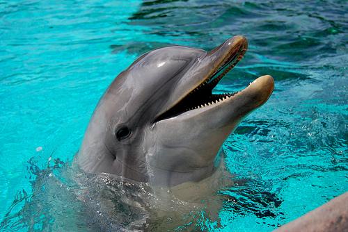 フリー画像| 動物写真| 哺乳類| イルカ|        フリー素材|